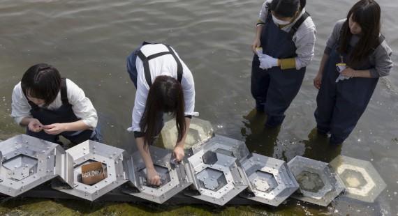 成安造形大学「魚道アートプロジェクト」