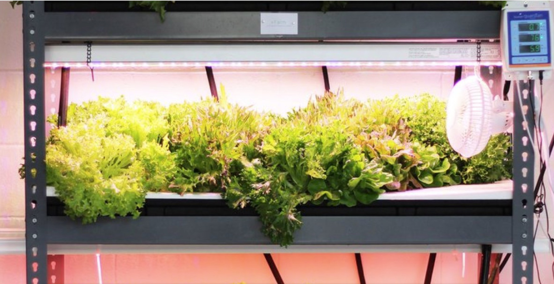 edible-innovations-going-vertical-smart-way-farm