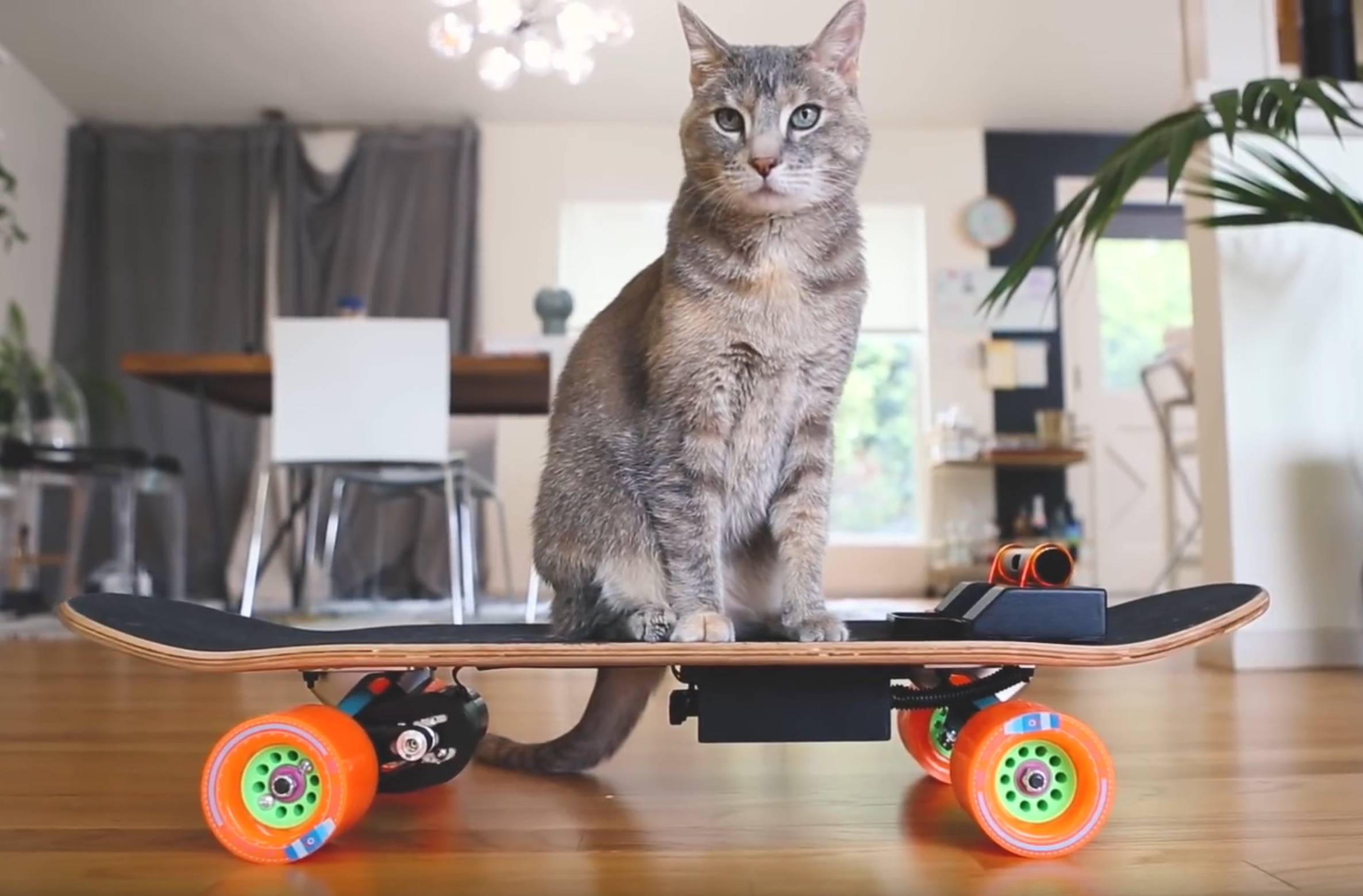 building-your-cat-a-custom-electric-skateboard